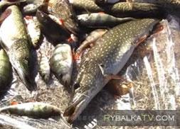 рыбалка в казахстане уральск кушум 2016