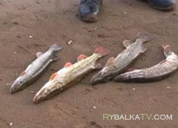Рыбалка на больших реках и озёрах Самарской области