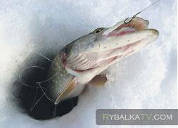 Рыбалка на Васильевских островах. Люберецкое