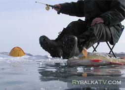 Подледный лов. Реки Волга и Криуша