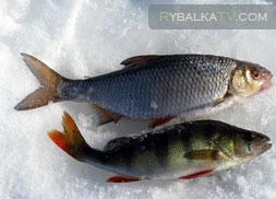 Лобановский пруд. Зима