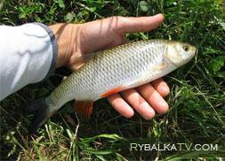 Летняя рыбалка на реках Волга и Тверца