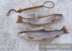 Озеро Кукас. Ловля гольца зимой