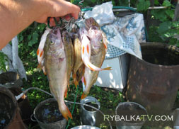 Рязанская область. Озеро Лакаш