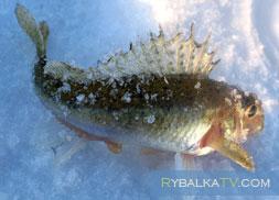 Подледная рыбалка на озере Раздольное