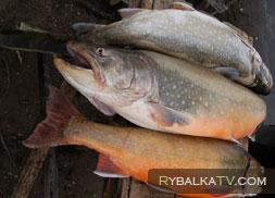 Рыбалка на Камчатке осенью. Река Карымчина