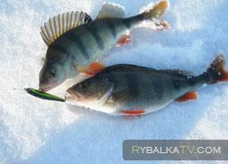Окуневые приманки для зимней ловли