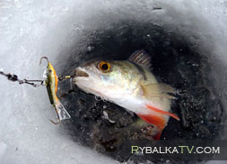 Зимние рыболовные ящики artekno