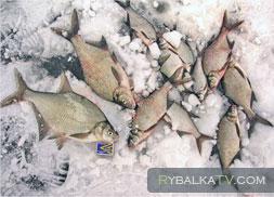 Зимняя ловля подлещика. Вазузское водохранилище