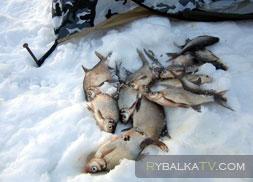 Ловля подлещика зимой