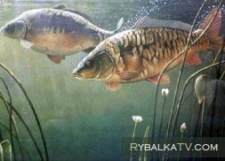 Карповая рыбалка
