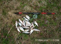 Ловля плотвы на Рыбинке