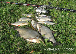 Выпуск 2. Квивертип | Рыбалка в Забайкальском крае