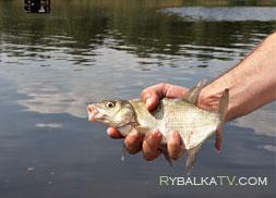 Поплавочная рыбалка на канале им. Москвы