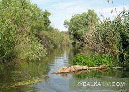 Ноябрь 2010. Дельта Волги. Верхняя Волга