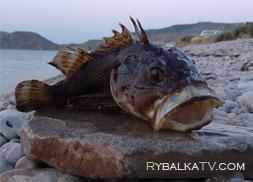Октябрь 2010. Рыбалка на Черном море