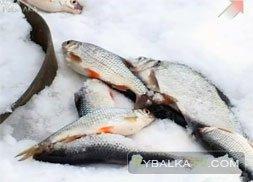 Зимняя рыбалка на Истринском. Часть 1