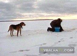 Зимняя ловля на Верхней Рыбинке. Часть 1