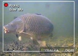 Тридцатифунтовые рыбки. Часть 2