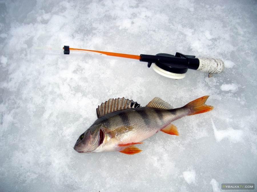 Айда на рыбалку!  «Глухозимье»