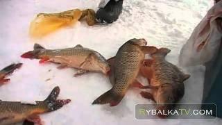 «Айда на рыбалку!» выпуск 5. База рыбаков «Зеркальный карп»