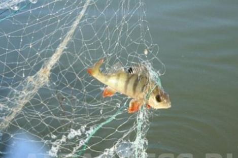 «Айда на рыбалку!» Три дня с инспектором Петровым
