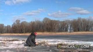 Зимняя ловля плотвы на «каток»