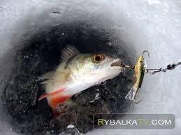 Рыболов-эксперт. Зимний фидер - ловля хищника