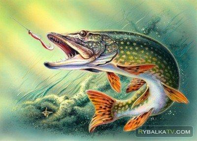 Рыбалка мечты - ФОРЕЛЬ
