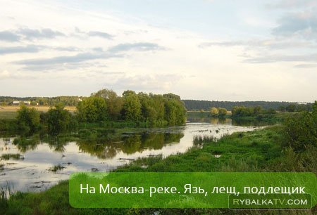Москва-река. Подлещик. Лещ