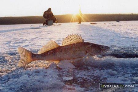 Ловля судака в зимнее время