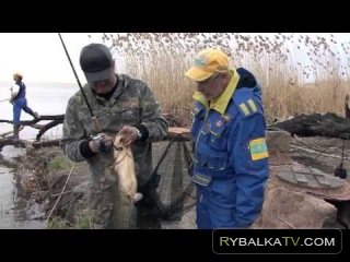 Простые радости. Рыбалка на сома в Казахстане реке Кигач