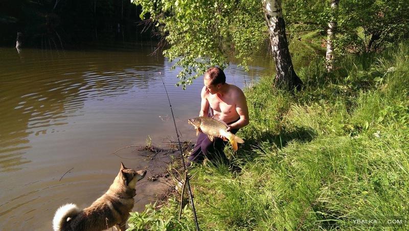 Рыбалка в Подмосковье на карпа