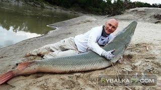 Панцирная щука и аллигатор гар. Рыбалка на Миссисипи