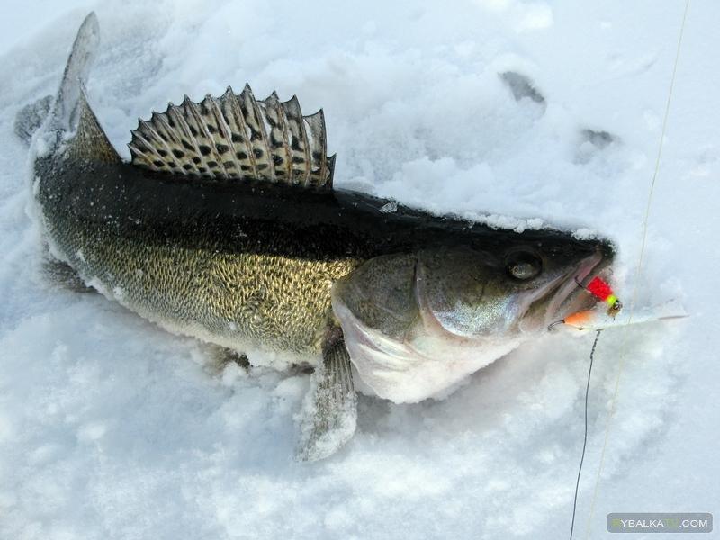 Программа «Рыбацкий узел» 146 «Рыбалка в Удмуртии»