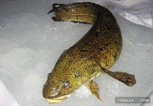 Программа «Рыбацкий узел» 147 «Рыбалка в Удмуртии»