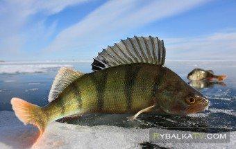 Передача «На рыбалке». 29 января