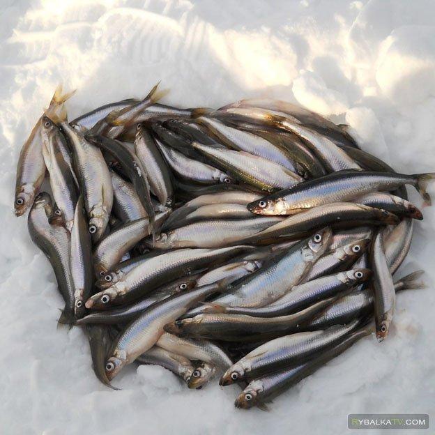 Рыбка с запахом огурца