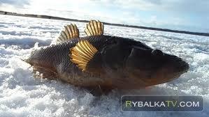 Простые радости. Ловля крупного ротана в метель. Неизвестный водоем на северо-востоке Челябинской области