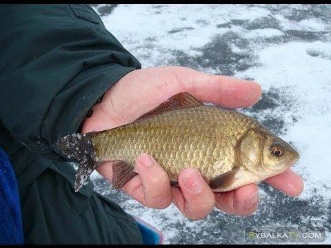 Истра. Зимняя подледная рыбалка