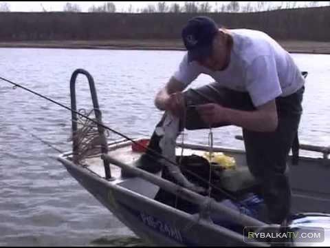 Ловля щуки и окуня на спиннинг Нижняя Волга