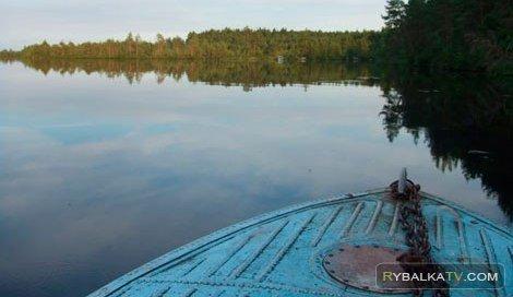 Вологодская область. Щука
