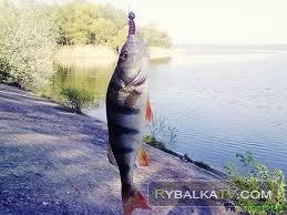 «Рыбак рыбаку».  За хищником с микроджигом