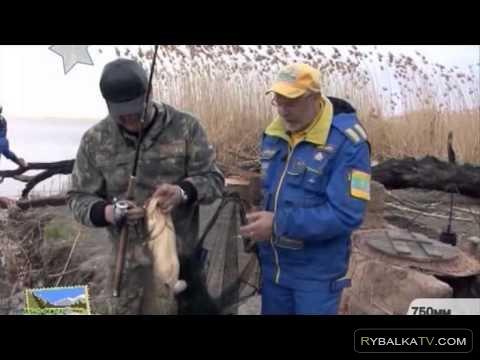 Простые радости. Рыбалка на сома в Казахстане на реке Кигач