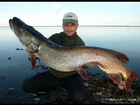 Простые радости. Супер рыбалка на щуку на Севере. Сургут август