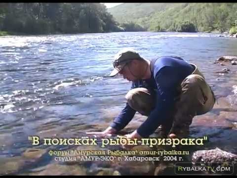 На Рыбалку. В поисках рыбы-призрака