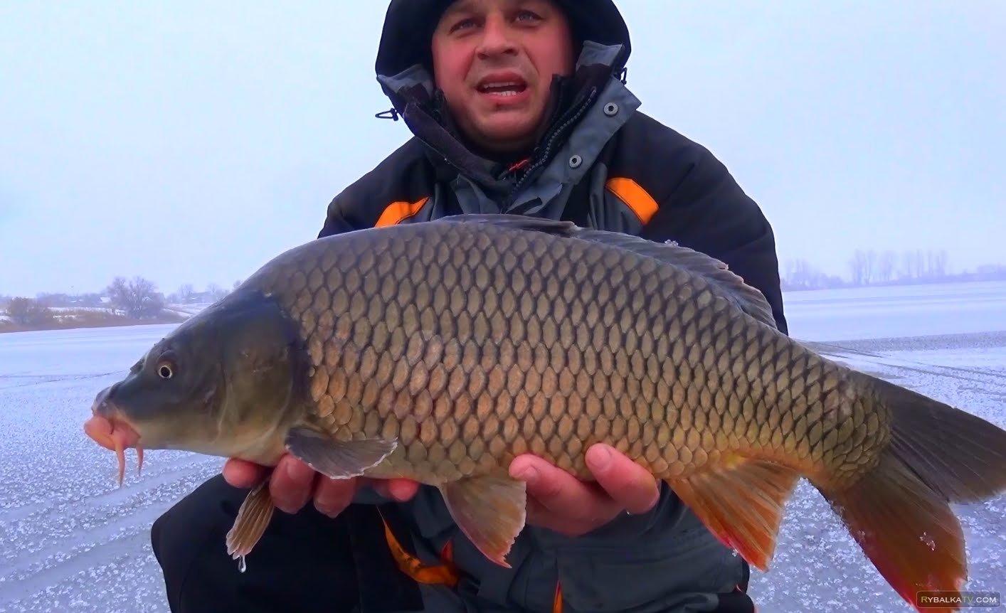 Клуб рыбаков. Рыбалка зимой. Ловля огромных карпов со льда