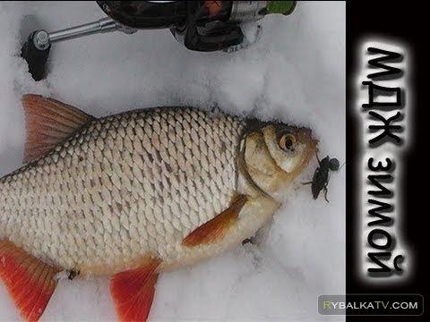 Олег Мясников. Рыбалка на Северском Донце в феврале