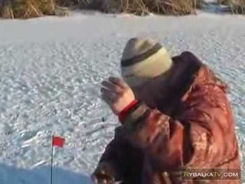 Ловля щуки на жерлицы по первому льду на озере Неро в Ростове
