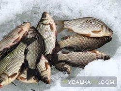 Рыбак Рыбаку. За карасем на лед